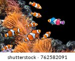 Stock photo concept to be yourself to be unique a flock of standard clownfish and one colorful fish on 762582091