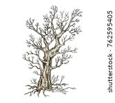 a sketch of the tree on a white ... | Shutterstock .eps vector #762595405