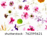 colorful dry flowers | Shutterstock . vector #762595621