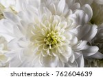white flowers background  macro ... | Shutterstock . vector #762604639