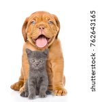 Bordeaux Dogue Puppy And...