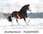 Clydesdale Horse Runs Gallop O...