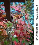 autumn leaves in colors | Shutterstock . vector #762832675