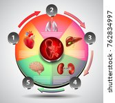 infographics with fetus on... | Shutterstock .eps vector #762834997