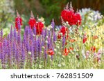 beautiful lilac and red flowers ... | Shutterstock . vector #762851509