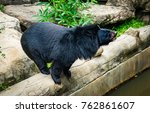 Asian Black Bear Feeding - Fine Art prints