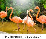Flamingos Zoo Concept Lesser Flamingos - Fine Art prints