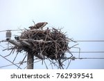 eagle in its nest at electric... | Shutterstock . vector #762939541