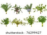herb leaf posy selection of... | Shutterstock . vector #76299427
