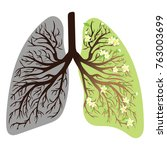 human lungs. respiratory system.... | Shutterstock .eps vector #763003699