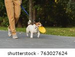 Stock photo obedient dog next to owner walking on leash holding toy in mouth 763027624