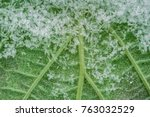 Snowflakes On A Green Leaf...
