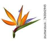 bird of paradise tropical... | Shutterstock .eps vector #763042945