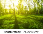 green forest glade in a rays of ... | Shutterstock . vector #763048999