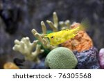 The Longhorn Cowfish Is A...