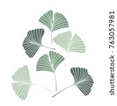 Vector Illustration Ginkgo...