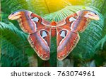 beautiful big butterfly  giant... | Shutterstock . vector #763074961