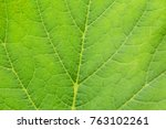 nature background close up | Shutterstock . vector #763102261