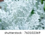nature background close up | Shutterstock . vector #763102369