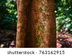 tropical tree trunk on the... | Shutterstock . vector #763162915