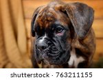 Stock photo close up portrait puppy dog breed boxer in profile on wooden background 763211155