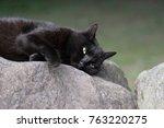 A Lazy Wild Black Cat Rest On ...