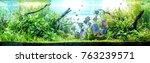 Vibrant planted aquarium with...