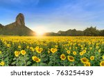 Small photo of beautiful sunflower fields with moutain background on sunrise, the Famous Attractions flower on winter in Lop buri province