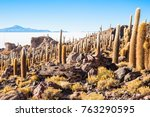 view of cactus covering isla... | Shutterstock . vector #763290595