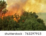 Burning Forest. California...