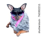 dog in the clothes of a skier ... | Shutterstock . vector #763302211
