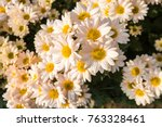flowers  flowers chrysanthemum  ... | Shutterstock . vector #763328461