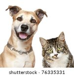 Stock photo staffordshire terrier dog and cat close up portrait on a white background 76335331