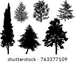 illustration with coniferous... | Shutterstock .eps vector #763377109
