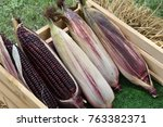 purple corns in the crate | Shutterstock . vector #763382371