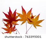 close up of maple leaves on a... | Shutterstock . vector #763395001