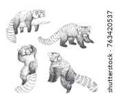 Vector Set Of Cute Red Pandas...