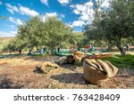 fresh olives harvesting from...   Shutterstock . vector #763428409