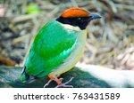 beautiful green with orange... | Shutterstock . vector #763431589