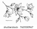 Stock vector magnolia flower drawing and sketch with black and white line art 763530967