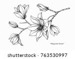 Stock vector magnolia flower drawing and sketch with black and white line art 763530997