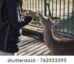wild deer and famous for... | Shutterstock . vector #763553395