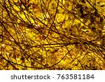 beautiful yellow forest | Shutterstock . vector #763581184