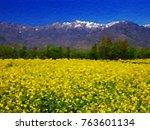 Beautiful Mustard Field In...