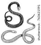 viper snake. serpent cobra and... | Shutterstock .eps vector #763621591