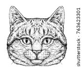 hand drawn portrait of cute cat ... | Shutterstock .eps vector #763623301