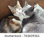Stock photo  little cats sleeping kitten 763639261