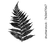 fern. black isolated silhouette ... | Shutterstock .eps vector #763647067