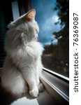 White Cat Sit By The Window At...
