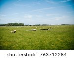 sheep in the meadow | Shutterstock . vector #763712284